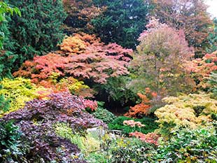 Autumn in the UWBG Woodland Garden.