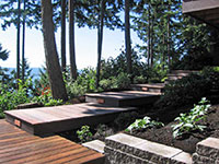 The boardwalk takes you past huge conifers and through a rhododendron garden
