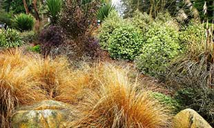 New Zealand preview garden at UWBG offers design ideas translatable to Northwest landscapes.
