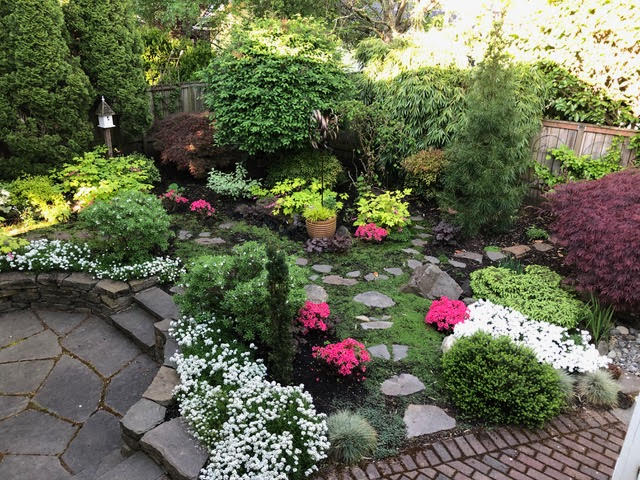 Sunken flagstone patio with two stairs that lead to the upper garden.     Stepping stones create paths that lead through vibrant blooming shrubs and     bright greens with a crimson Japanese Maple.