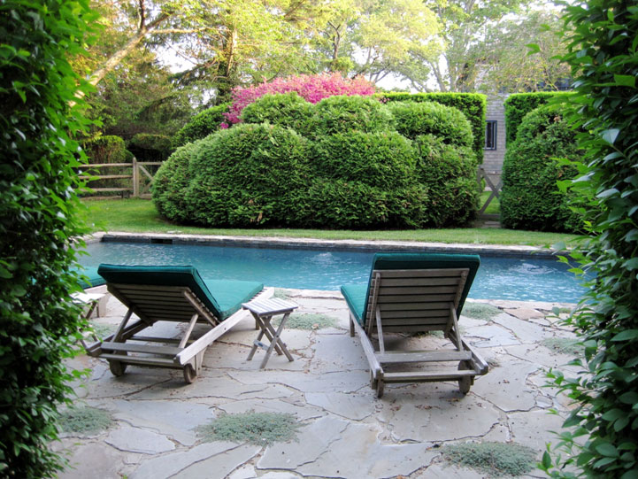 backyard landscape design, pool with pool chairs and tall ivy on both sides of entrance
